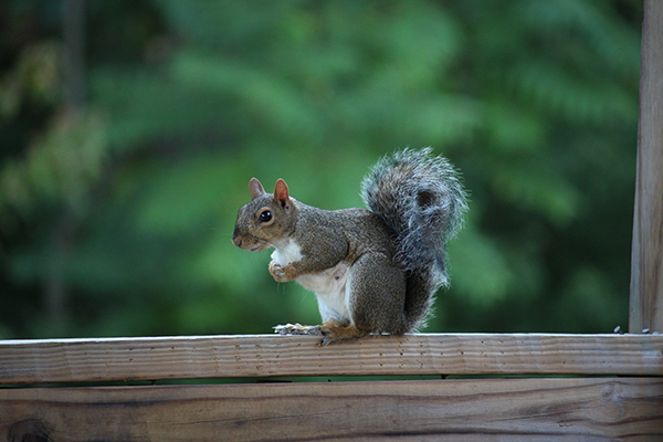 Squirreling Around by Pat Pope